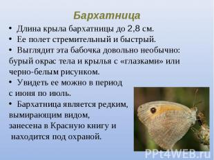 Длина крыла бархатницы до 2,8 см. Длина крыла бархатницы до 2,8 см. Ее полет стр
