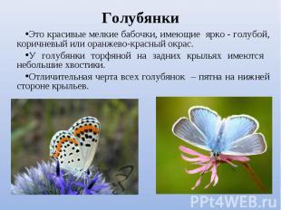 Это красивые мелкие бабочки, имеющие ярко - голубой, коричневый или оранжево-кра