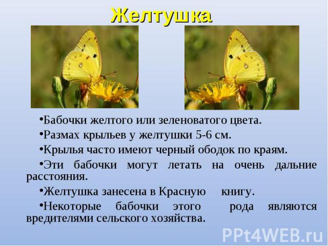 Бабочки желтого или зеленоватого цвета. Бабочки желтого или зеленоватого цвета. Размах крыльев у желтушки 5-6 см. Крылья часто имеют черный ободок по краям. Эти бабочки могут летать на очень дальние расстояния. Желтушка занесена в Красную книгу. Нек…