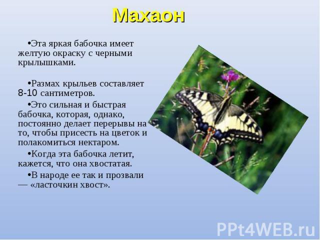 Эта яркая бабочка имеет желтую окраску с черными крылышками. Эта яркая бабочка имеет желтую окраску с черными крылышками. Размах крыльев составляет 8-10 сантиметров. Это сильная и быстрая бабочка, которая, однако, постоянно делает перерывы на то, чт…