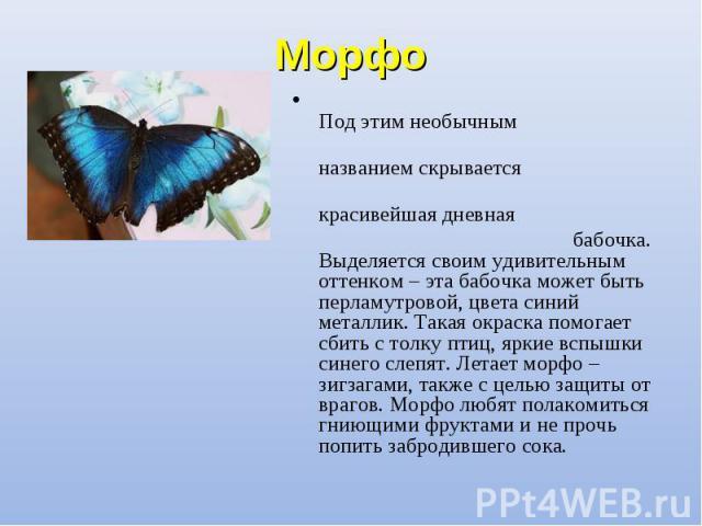Под этим необычным Под этим необычным названием скрывается красивейшая дневная бабочка. Выделяется своим удивительным оттенком – эта бабочка может быть перламутровой, цвета синий металлик. Такая окраска помогает сбить с толку птиц, яркие вспышки син…