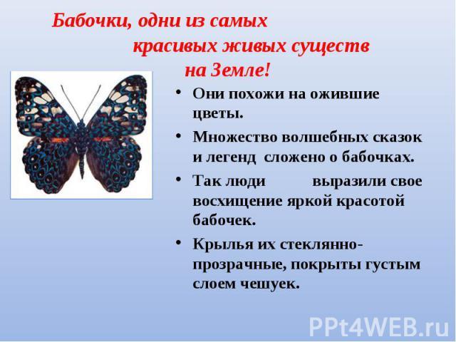 Они похожи на ожившие цветы. Они похожи на ожившие цветы. Множество волшебных сказок и легенд сложено о бабочках. Так люди выразили свое восхищение яркой красотой бабочек. Крылья их стеклянно-прозрачные, покрыты густым слоем чешуек.