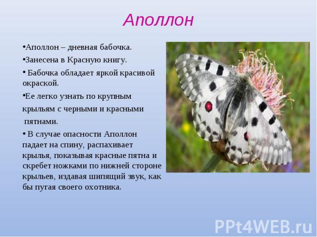 Аполлон – дневная бабочка. Аполлон – дневная бабочка. Занесена в Красную книгу. Бабочка обладает яркой красивой окраской. Ее легко узнать по крупным крыльям с черными и красными пятнами. В случае опасности Аполлон падает на спину, распахивает крылья…