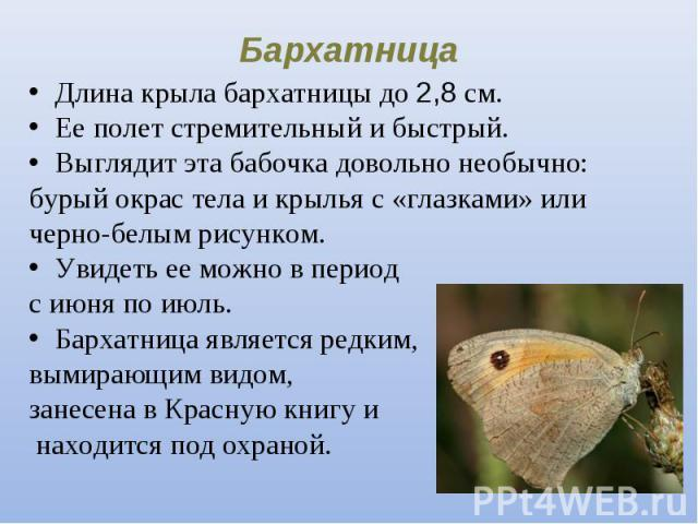 Длина крыла бархатницы до 2,8 см. Длина крыла бархатницы до 2,8 см. Ее полет стремительный и быстрый. Выглядит эта бабочка довольно необычно: бурый окрас тела и крылья с «глазками» или черно-белым рисунком. Увидеть ее можно в период с июня по июль. …