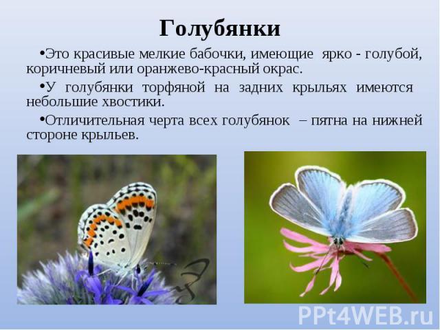 Это красивые мелкие бабочки, имеющие ярко - голубой, коричневый или оранжево-красный окрас. Это красивые мелкие бабочки, имеющие ярко - голубой, коричневый или оранжево-красный окрас. У голубянки торфяной на задних крыльях имеются небольшие хвостики…