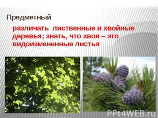 Предметный различать лиственные и хвойные деревья; знать, что хвоя – это видоизм