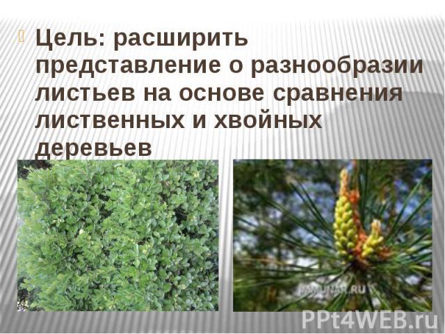 Цель: расширить представление о разнообразии листьев на основе сравнения лиственных и хвойных деревьев