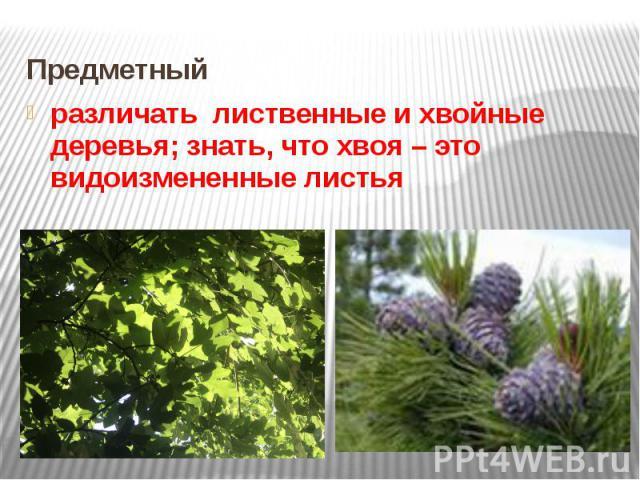 Предметный различать лиственные и хвойные деревья; знать, что хвоя – это видоизмененные листья