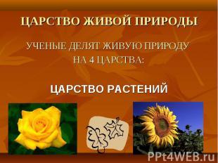 УЧЕНЫЕ ДЕЛЯТ ЖИВУЮ ПРИРОДУ УЧЕНЫЕ ДЕЛЯТ ЖИВУЮ ПРИРОДУ НА 4 ЦАРСТВА: ЦАРСТВО РАСТ