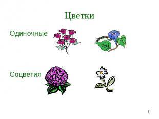 Одиночные Одиночные Соцветия