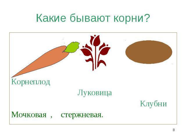 Корнеплод Луковица Клубни Мочковая , стержневая.