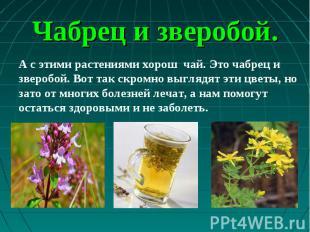 А с этими растениями хорош чай. Это чабрец и зверобой. Вот так скромно выглядят