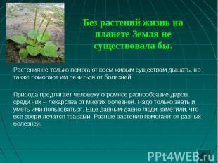 Растения не только помогают всем живым существам дышать, но также помогают им ле