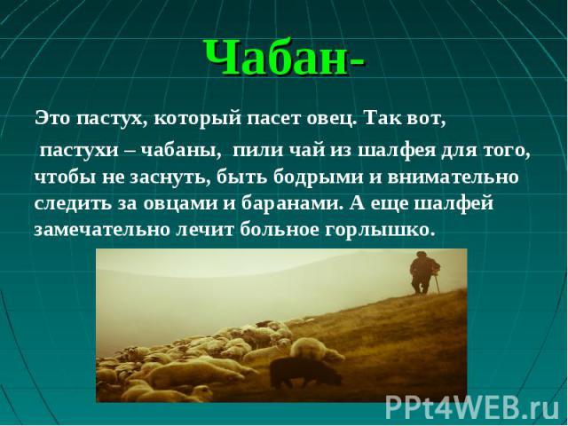 Это пастух, который пасет овец. Так вот, Это пастух, который пасет овец. Так вот, пастухи – чабаны, пили чай из шалфея для того, чтобы не заснуть, быть бодрыми и внимательно следить за овцами и баранами. А еще шалфей замечательно лечит больное горлышко.