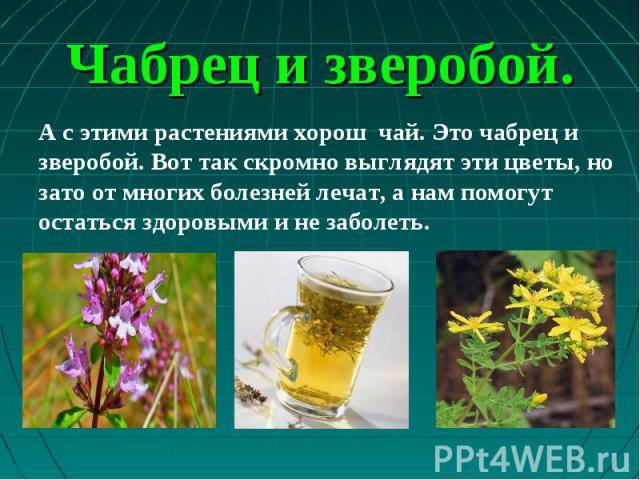 А с этими растениями хорош чай. Это чабрец и зверобой. Вот так скромно выглядят эти цветы, но зато от многих болезней лечат, а нам помогут остаться здоровыми и не заболеть. А с этими растениями хорош чай. Это чабрец и зверобой. Вот так скромно выгля…