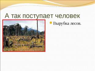 Вырубка лесов. Вырубка лесов.