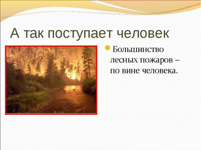 Большинство лесных пожаров – по вине человека. Большинство лесных пожаров – по вине человека.