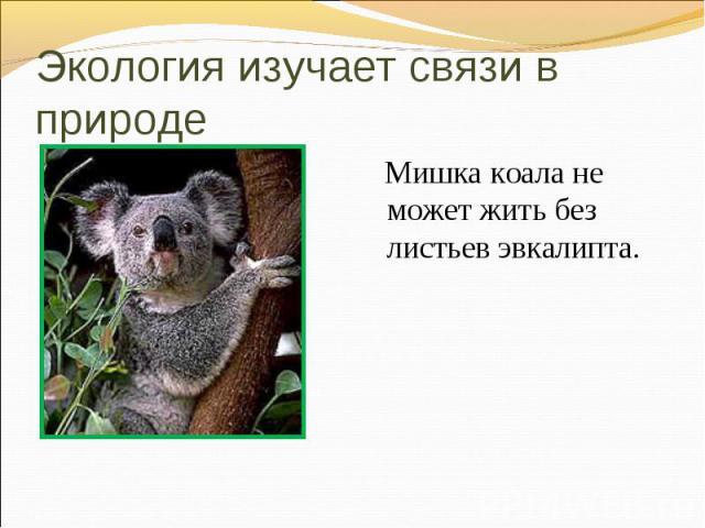 Мишка коала не может жить без листьев эвкалипта. Мишка коала не может жить без листьев эвкалипта.