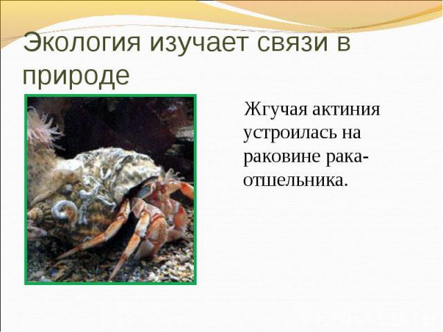 Жгучая актиния устроилась на раковине рака-отшельника. Жгучая актиния устроилась на раковине рака-отшельника.