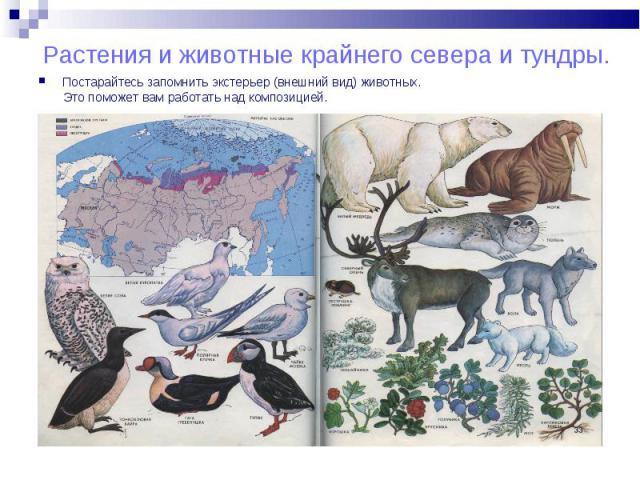 Постарайтесь запомнить экстерьер (внешний вид) животных. Постарайтесь запомнить экстерьер (внешний вид) животных. Это поможет вам работать над композицией.