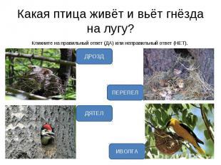 Кликните на правильный ответ (ДА) или неправильный ответ (НЕТ). Кликните на прав