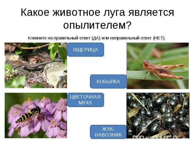 Кликните на правильный ответ (ДА) или неправильный ответ (НЕТ). Кликните на правильный ответ (ДА) или неправильный ответ (НЕТ).