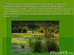 Прошло несколько десятков лет, и растения полностью захватили озерцо, закрыли во