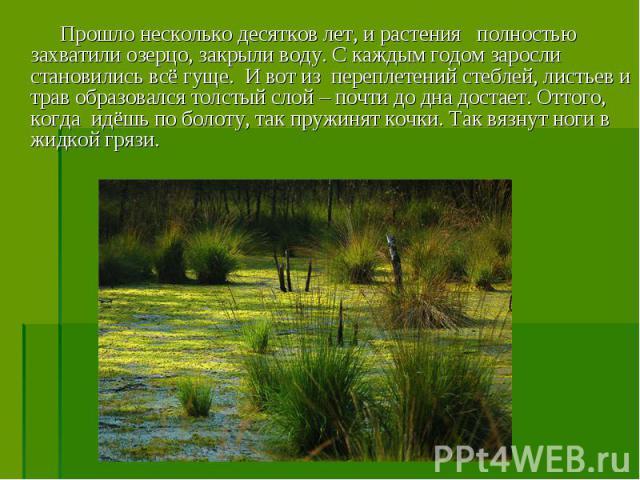 Прошло несколько десятков лет, и растения полностью захватили озерцо, закрыли воду. С каждым годом заросли становились всё гуще. И вот из переплетений стеблей, листьев и трав образовался толстый слой – почти до дна достает. Оттого, когда идёшь по бо…