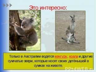 Это интересно: Только в Австралии водятся кенгуру, коала и другие сумчатые звери