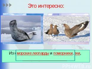 Это интересно: Из наземных животных обитают тюлени, императорские пингвины,