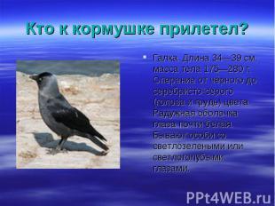 Галка. Длина 34—39см, масса тела 175—280 г. Оперение от чёрного до серебри