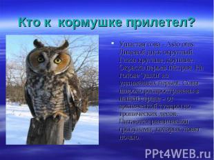 Ушастая сова - Asio otus. Лицевой диск округлый. Глаза круглые, крупные. Окраска