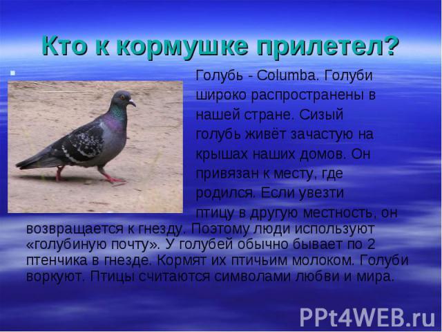 Голубь - Columba. Голуби Голубь - Columba. Голуби широко распространены в нашей стране. Сизый голубь живёт зачастую на крышах наших домов. Он привязан к месту, где родился. Если увезти птицу в другую местность, он возвращается к гнезду. Поэтому люди…