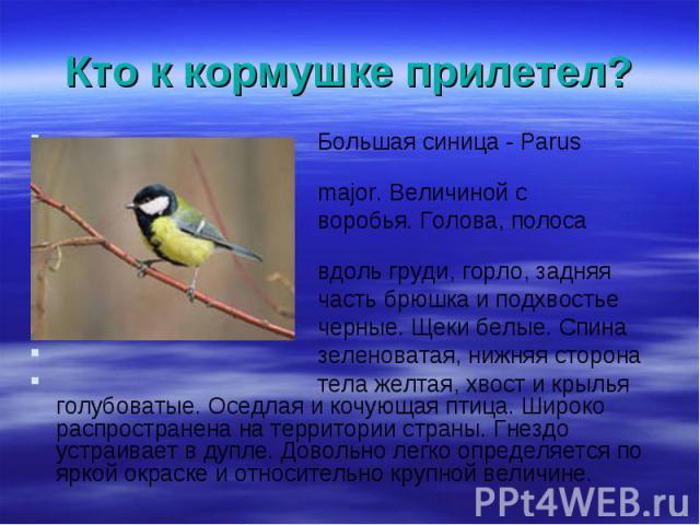 Большая синица - Parus Большая синица - Parus major. Величиной с воробья. Голова, полоса вдоль груди, горло, задняя часть брюшка и подхвостье черные. Щеки белые. Спина зеленоватая, нижняя сторона тела желтая, хвост и крылья голубоватые. Оседлая и ко…