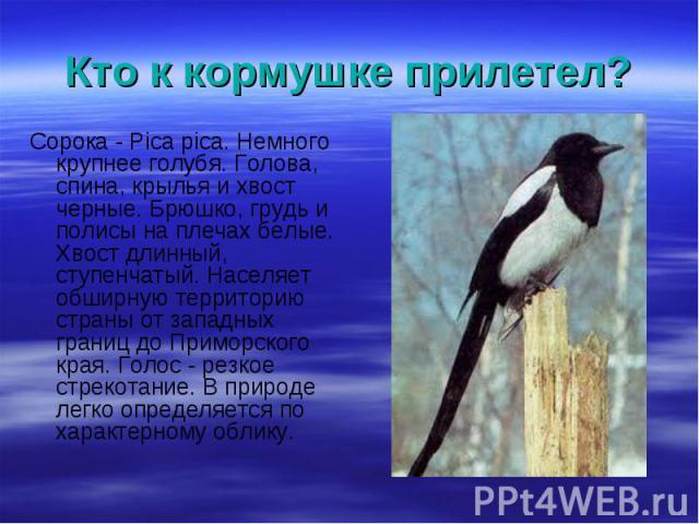 Сорока - Pica pica. Немного крупнее голубя. Голова, спина, крылья и хвост черные. Брюшко, грудь и полисы на плечах белые. Хвост длинный, ступенчатый. Населяет обширную территорию страны от западных границ до Приморского края. Голос - резкое стрекота…
