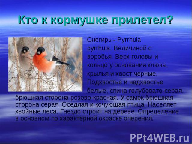 Снегирь - Pyrrhula Снегирь - Pyrrhula pyrrhula. Величиной с воробья. Верх головы и кольцо у основания клюва, крылья и хвост черные. Подхвостье и надхвостье белые, спина голубовато-серая, брюшная сторона розово-красная. У самок брюшная сторона серая.…