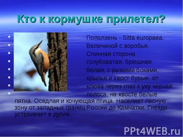 Поползень - Sitta europaea. Поползень - Sitta europaea. Величиной с воробья. Спинная сторона голубоватая, брюшная белая, с рыжими боками, крылья и хвост бурые, от клюва через глаз к уху черная полоса, на хвосте белые пятна. Оседлая и кочующая птица.…