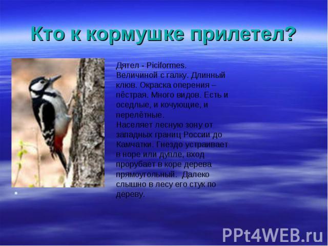 Дятел - Piciformes. Дятел - Piciformes. Величиной с галку. Длинный клюв. Окраска оперения – пёстрая. Много видов. Есть и оседлые, и кочующие, и перелётные. Населяет лесную зону от западных границ России до Камчатки. Гнездо устраивает в норе или дупл…