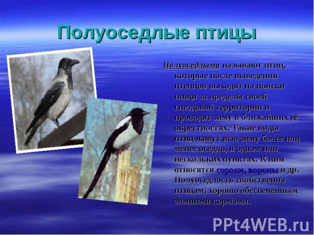 Полуоседлыми называют птиц, которые после выведения птенцов выходят на поиски пищи за пределы своей гнездовой территории и проводят зиму в ближайших её окрестностях. Такие виды птиц живут всю зиму более или менее оседло, в одном или нескольких пункт…