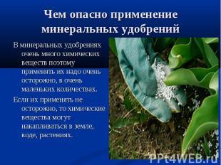 В минеральных удобрениях очень много химических веществ поэтому применять их над