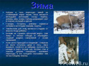 Кабаны и лоси переходят зимой на стойбищный образ жизни. Лоси питаются молодыми