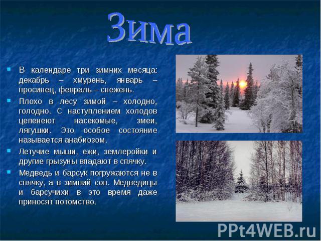 В календаре три зимних месяца: декабрь – хмурень, январь – просинец, февраль – снежень. В календаре три зимних месяца: декабрь – хмурень, январь – просинец, февраль – снежень. Плохо в лесу зимой – холодно, голодно. С наступлением холодов цепенеют на…