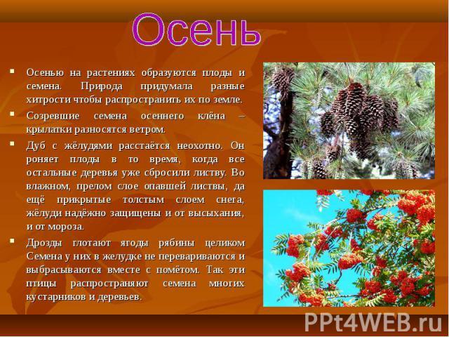 Осенью на растениях образуются плоды и семена. Природа придумала разные хитрости чтобы распространить их по земле. Осенью на растениях образуются плоды и семена. Природа придумала разные хитрости чтобы распространить их по земле. Созревшие семена ос…