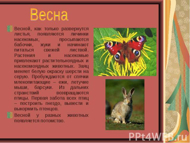 Весной, как только развернутся листья, появляются личинки насекомых, просыпаются бабочки, жуки и начинают питаться свежей листвой. Растения и насекомые привлекают растительноядных и насекомоядных животных. Заяц меняет белую окраску шерсти на серую. …