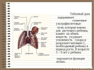 Табачный дым задерживает солнечные ультрафиолетовые Табачный дым задерживает сол