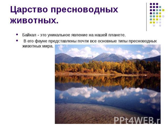 Байкал - это уникальное явление на нашей планете. Байкал - это уникальное явление на нашей планете. В его фауне представлены почти все основные типы пресноводных животных мира.