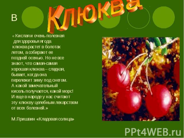 « Кислая и очень полезная « Кислая и очень полезная для здоровья ягода клюква растет в болотах летом, а собирают ее поздней осенью. Но не все знают, что самая-самая хорошая клюква – сладкая, бывает, когда она перележит зиму под снегом. А какой замеч…