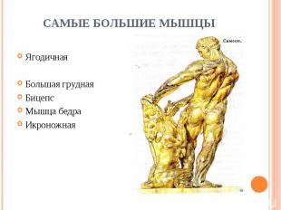 Ягодичная Ягодичная Большая грудная Бицепс Мышца бедра Икроножная