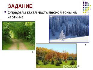 Определи какая часть лесной зоны на картинке Определи какая часть лесной зоны на