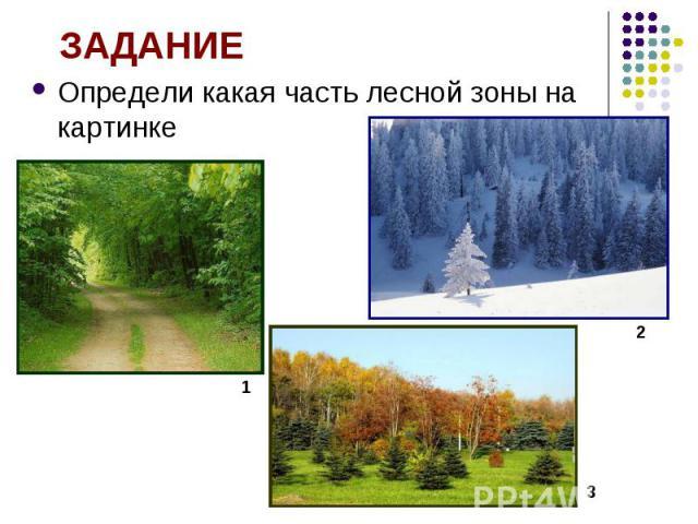 Определи какая часть лесной зоны на картинке Определи какая часть лесной зоны на картинке